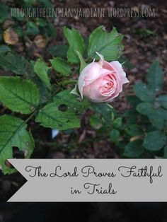 The Lord Proves Faithful in Trials: How He has kept His promises to me! My miscarriage story.