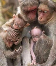 All primates have feelings. Primates, Mammals, Nature Animals, Animals And Pets, Wildlife Nature, Wild Animals, Beautiful Creatures, Animals Beautiful, Cute Baby Animals
