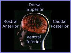 Neuroscience Tutorial