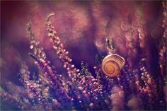 Η μαγεία της φύσης σε φωτογραφίες