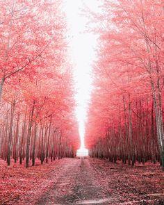 Fall is amongst us. -
