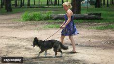 Best dog-loving campsites in Oz: Flanagan Reserve Bush Camping