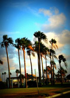 Palms at Corpus! I will see you in June!!!!