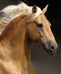 Les chevaux de rêve.