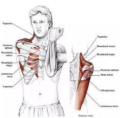 15 Estiramientos para aliviar la tensión en el cuello y los hombros - Mundoamores Kickboxing, Stretching, Reiki, Pilates, Health Fitness, Gym, Workout, Yoga, Physical Therapy