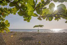 Einsamer Baum am Strand von Dominica