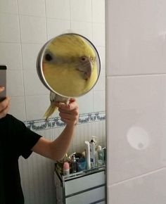 """28 Ducking Great Birb Memes That'll You Quack You Right Up - Funny memes that """"GET IT"""" and want you to too. Get the latest funniest memes and keep up what is going on in the meme-o-sphere. Funny Birds, Cute Birds, Cute Funny Animals, Funny Cute, Hilarious, Animal Pictures, Cute Pictures, Funny Parrots, Budgies"""