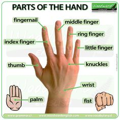 Parts of the Hand English Vocabulary Parts of the Hand Vocabulary in English Here are 7 words associated with the hand: LITTLE FINGER / PINKY little finger / pinky (noun): the smallest finger on the hand. Pinky is an informal name Learning English For Kids, Teaching English Grammar, English Lessons For Kids, English Writing Skills, English Vocabulary Words, Learn English Words, English Phrases, English Language Learning, English Study