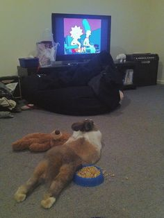 This bun enjoying some nightly cartoons. | 42 Pictures That Will Restore Your Faith In Cute