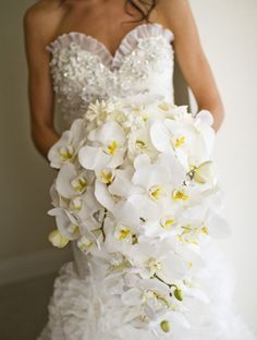 Cascading white orchids.