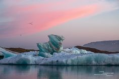 I always arrive in Jökulsárlón at night so I can make the most of the first light of day when there's nobody else around. At midnight in June, the colors of the sky, the water, and the earth have the good taste to be perfectly complementary (pink/cyan). The birds seem to appreciate it as much as I do.