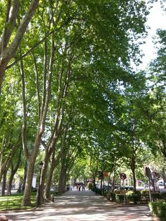 Paseo del Prado en Madrid, Madrid