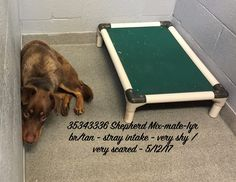 **1-YR-OLD SHEPHERD BOY - AT RISK TO BE KILLED 7/3/17 Brown/tan stray intake, very shy very scared 12 May 2017***LOS LUNAS, NM. The Valencia County shelter takes in 50-100 dogs per week. Estimated dates and extended if the dog is still available. This dog's status can change at any time. Act quickly if you are interested in saving this dog.
