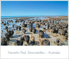 Hamelin Pool, Stromatolites - Australia. I was too young then to appreciate these ancient growths