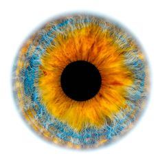 Windows to the Soul - Iris gallery by Fine Art Photographer Edouard Janssens. Eye Texture, Blue Background Images, Bio Art, Wheel Of Life, Human Body Parts, Human Figure Drawing, Overlays, Photos Of Eyes, Crazy Eyes