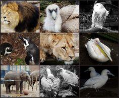 Artis Zoo | Amsterdam | Holland | Lion | Vulture | Snowy Owl | Pelican | Elephant
