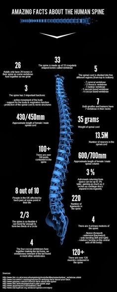 Amazing facts about the human Spine