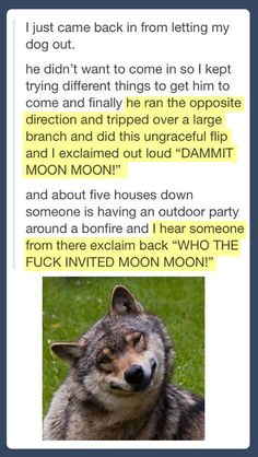 Haha I love all of the moon moon posts