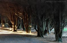 'Floresta mágica...', de Emília Duarte