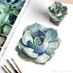 This small but beautiful Echeveria lilacina was the perfect subject for a waterc… - PAINTING SUBJECTS Watercolor And Ink, Watercolor Illustration, Watercolour Painting, Plant Illustration, Painting Prints, Watercolours, Succulents Drawing, Watercolor Succulents, Watercolor Flowers