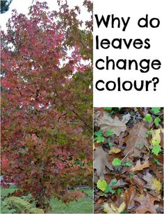 Why do leaves change colour in Autumn?  You can simply scale down some of the verbiage for a preschool child.