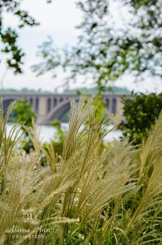 Bridge Bokeh | Photo...