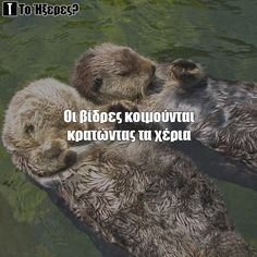 Otters Otters, Brown Bear, Animals, Animales, Otter, Animaux, Animal, Animais, Dieren