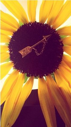 Sunflowers and Pi Beta Phi #piphi #pibetaphi