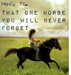 I have fond memories of every horse I have owned, but the first one that I bought with my own money will always have a special place in my heart.