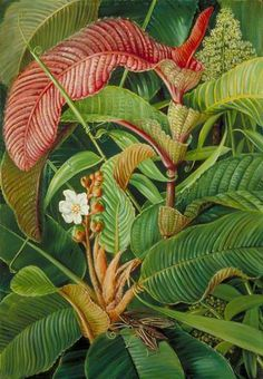 Wormia and Flagellaria in the Seychelles by Marianne North; c. 1883; Oil on board; Collection: Royal Botanic Gardens, Kew, England