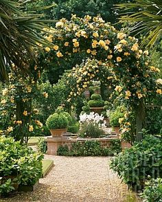 Arches of rosa 'Mari Beautiful gorgeous pretty flowers