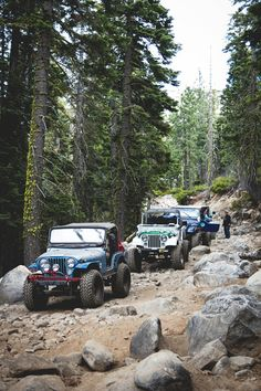 Jeep CJs on the trail