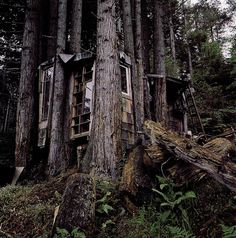 more tree than house