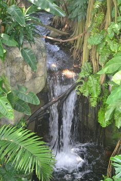 Moody Gardens Rainforest