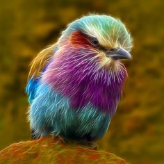 Animals of the world, all about animals, colorful birds, pretty birds, beau All About Animals, Animals Of The World, Animals And Pets, Cute Animals, Pretty Birds, Beautiful Birds, Animals Beautiful, Exotic Birds, Colorful Birds