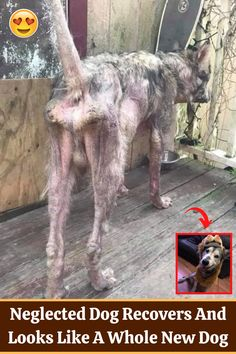 #Neglected #Dog #Recovers #Looks #Whole #New #Dog Poor Dog, Pom Pom Crafts, Amazing Buildings, Ashtanga Yoga, Acrylic Nail Designs, American Horror Story, Bottle Crafts, Captain Marvel, Cool Watches