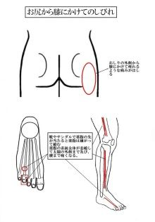 シェアお願いシリーズ VOL 24 脊柱管狭窄症 最近多いのがこの腰痛である ほとんどの治療家が原因が判らず治すのを難渋する 原因は・・ 靴のデザインと日本人の足型とが合わない為に第四指の指先が靴にあたり指が縮み、第三指に踏まれて更に縮む そのため、その部分に繋がる むこうずねから太腿の脇までの腱が縮み、おしりの横側の部分がしびれるような痛みがおきてしまう そのままの状態にしておくと お尻から膝にかけてどこが痛いのか判らないまま 歩けなくなるほどの痛みまで悪化する 坐骨神経痛や椎間板ヘルニアに間違えられやすい この脊柱管狭窄症を長く患うと・・生殖器にも影響が・・ 靴の選択は アジア圏の靴はヤバイかも この症状を抱えている人は国産の靴を