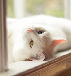 """""""A cat stretches from one end of my childhood to another."""" --Blaga Dimitrove"""