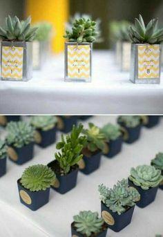 Suculentas y cactus para recuerdos de boda 2