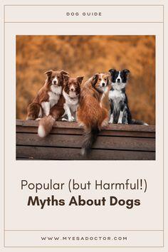 Emotional Support Animal, Dog Behavior, Pup, Adoption, Popular, Dogs, Animals, Foster Care Adoption, Animales