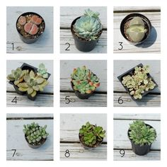 Types of Succulents + Tips for Planting