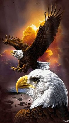 [Visit to Buy] Diy Diamond Painting Animals Birds Eagles Cross Stitch Square Rhinestone Pictures Of Crystals Diamond Embroidery full gear The Eagles, Bald Eagles, Eagles Live, Photo Aigle, Aigle Animal, Benfica Wallpaper, Eagle Drawing, Eagle Pictures, Gif Pictures