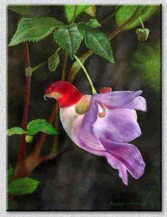 Parrot shaped flower