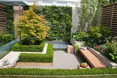 Garden Bench in small patio garden with plantings, wall, privacy, Acer, boxwood . Garden Bench in