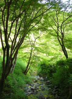 奈良市 正暦寺 菩提仙川 新緑 紫陽花