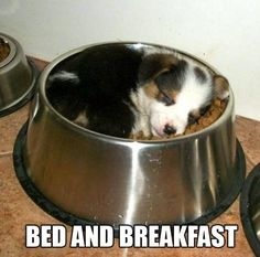Now this is bed and breakfast!