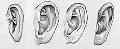 Ohren dreidimenstional zeichnen                                                                                                                                                                                 Mehr