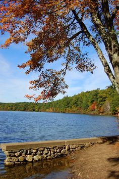 When we arrived, it was as storybook picture as it could be.  We spent the entire day there swimming and enjoying friends.  - Walden Pond