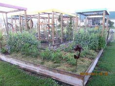 cost savings using soaker hose irrigation in garden Garden