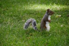 How To Keep Squirrels From The Flower Garden With Cayenne Pepper